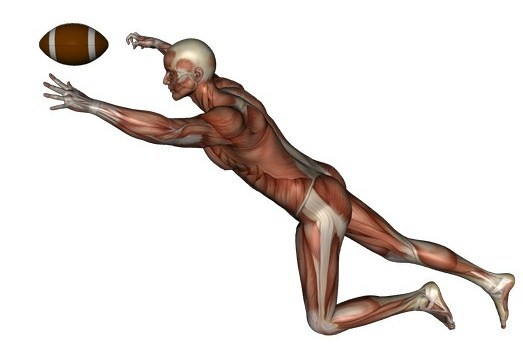 football muscles and joints